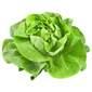 Salata puter