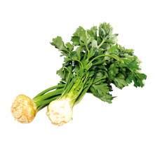 Celer mladi