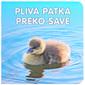 Pliva patka preko Save