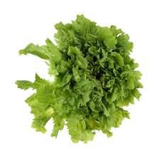 Salata endivija