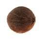 Kokos orah