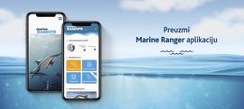 Što učiniti kad opazite dupine ili kitove na moru?  Pogledajte u aplikaciji marine RANGER!